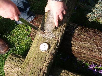 Außergewöhnlich Impfverfahren für Baumstämme #ZL_68